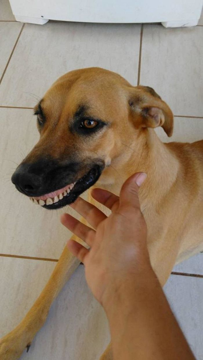 dog-finds-fake-teeth-pandora-3-58b3f77606c84__700