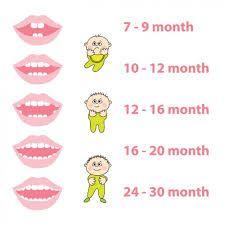 Calendario Dentini.Calendario Dentini Ma Quand E Che Spuntano Bigodino