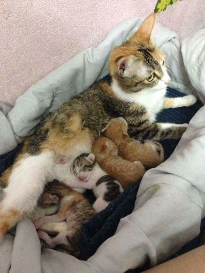 Tam The dà alla luce 4 cuccioli sani!