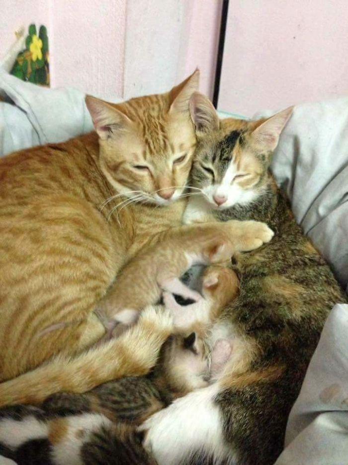 E Yello si prende cura di loro e della mamma