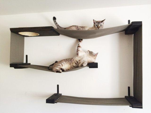 Arredare Casa A Misura Di Cane E Gatto Bigodino