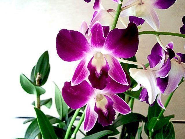 Le orchidee sono uno dei fiori più belli che esistano in natura.