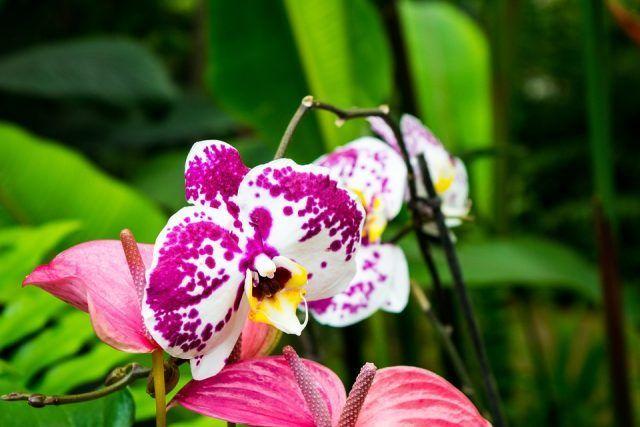 Le orchidee sono dei fiori tropicali, non dimentichiamolo quando creeremo il loro ambiente ideale.