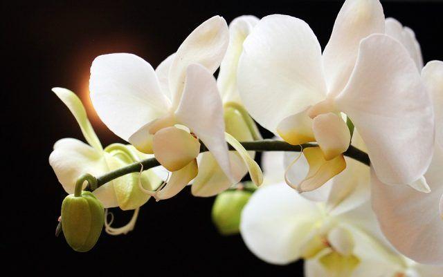 Se notate dei fiori secchi, non tagliateli: cadranno da soli. Le foglie cadute sul terriccio, invece, vanno eliminate.