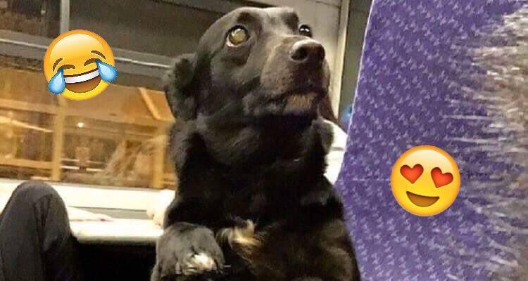 Il cane che cercava di sembrare un umano