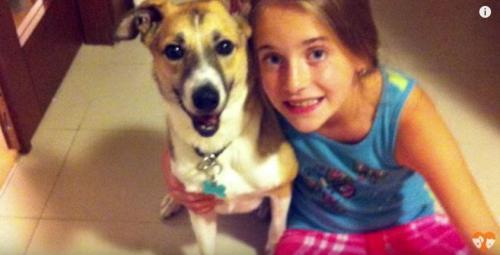 cane in casa rifugiato