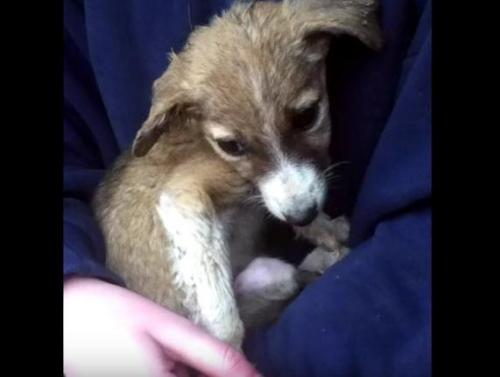 cane in rifugio