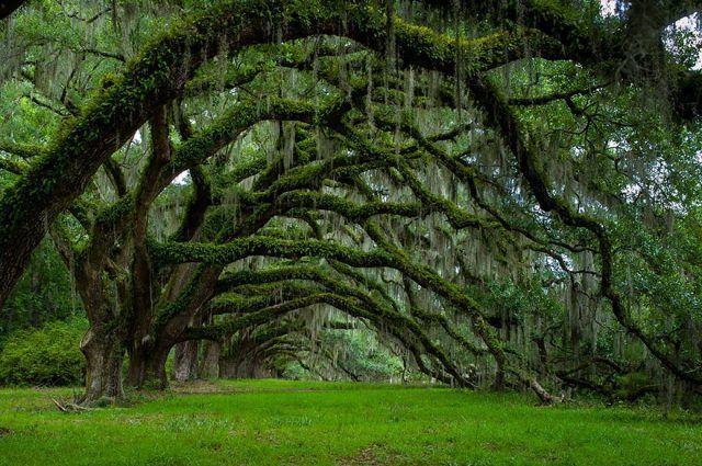 Carolina del Sud