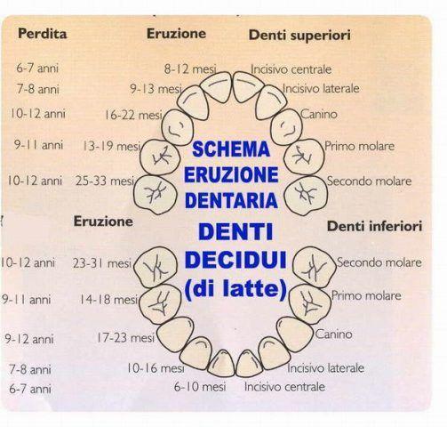 Calendario Dentini.Il Calendario Dei Dentini Del Bambino Quando Escono E In