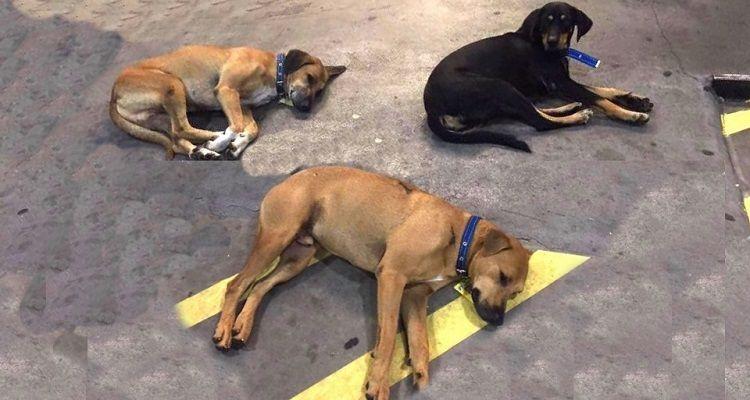 Questi 3 cani sono stati assunti in una stazione di servizio