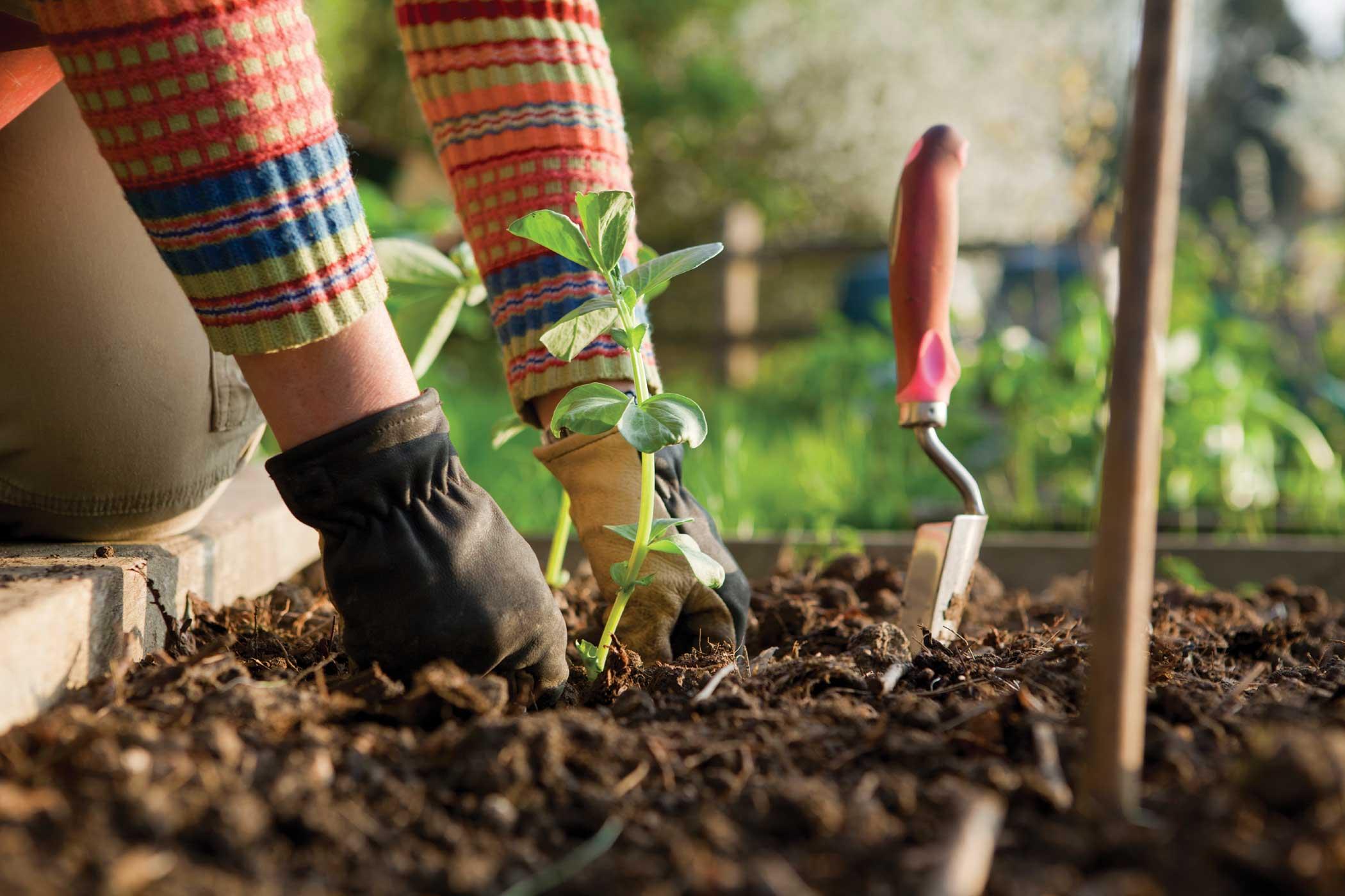 Ottobre: cosa fare in giardino
