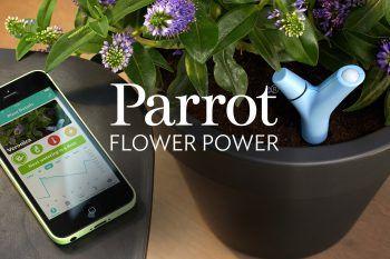 Ecco il vaso intelligente che risolve il problema delle piante quando siamo in vacanza