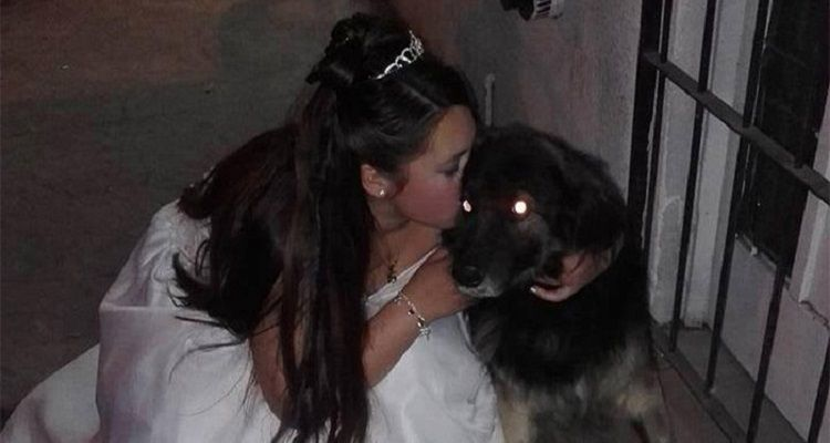 Una ragazza di 15 anni salva i cani randagi della città