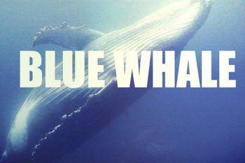 #Fermiamolabalena: associazioni contro il Blue Whale per aiutare i ragazzi