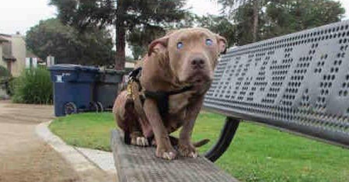 Poly la cagnolina cieca abbandonata su una panchina