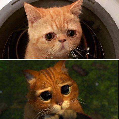 Nomi per gatti bianchi - Gattissimi