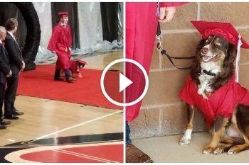 Festeggia la fine del liceo insieme al suo fedele cane