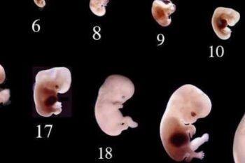 La gravidanza passo dopo passo: da 0 a 20 settimane.