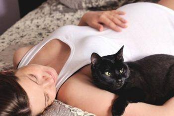 Sono incinta e ho un gatto. Devo sbarazzarmi di lui?