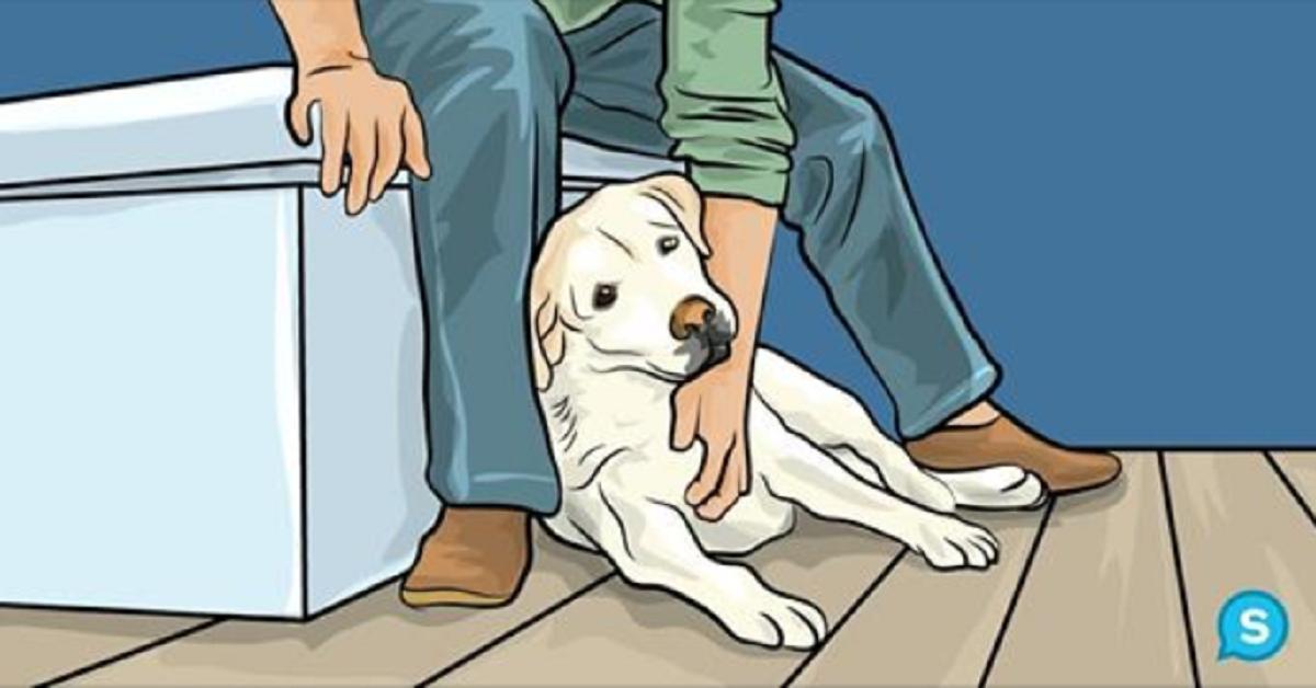 Dieci modi in cui il vostro cane quotidianamente vi dice che vi ama