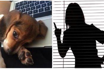 La fidanzata gli chiede di scegliere tra lei e il cane: ecco l'ironica idea del ragazzo