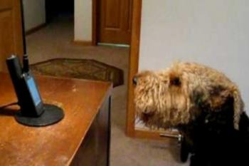 Al cucciolo manca la sua mamma, riesce a parlare al telefono con lei, le parole sciolgono i cuori