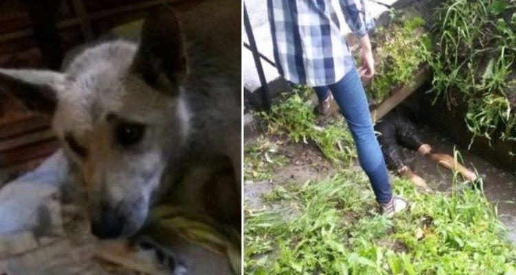 Un cane cerca di attirare l'attenzione dei passanti, piangendo e guardando in direzione di una buca