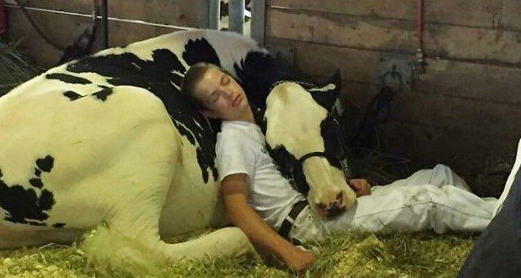 Posta la foto del figlio che dorme nella stalla