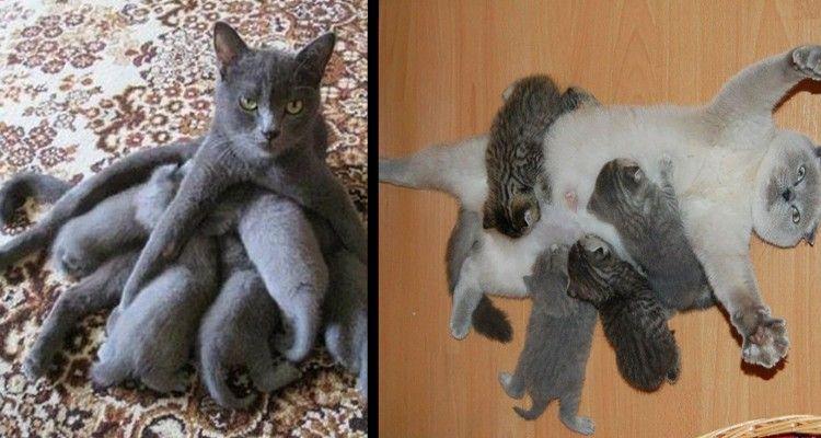 29 foto di mamme gatto alle prese con i loro cuccioli