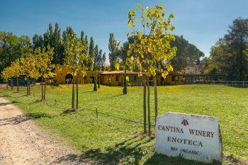 Frequentare un Wine Resort fa bene per tanti motivi
