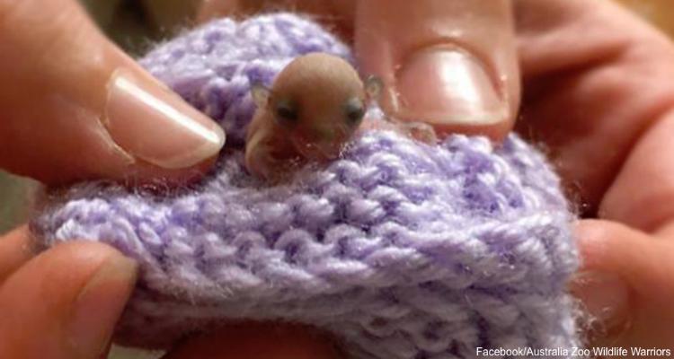 E' il più piccolo animale mai trovato e mai curato nella clinica