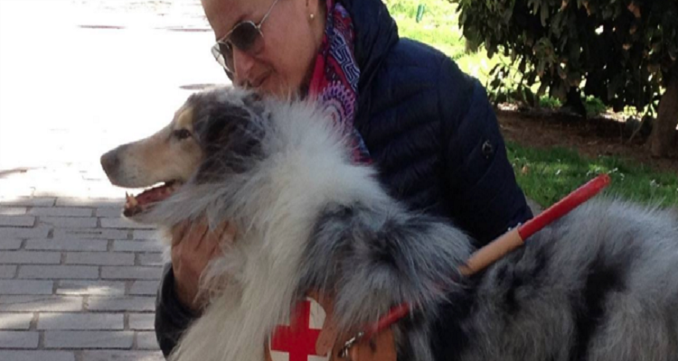 Brutta disavventura per una donna e il suo cane guida