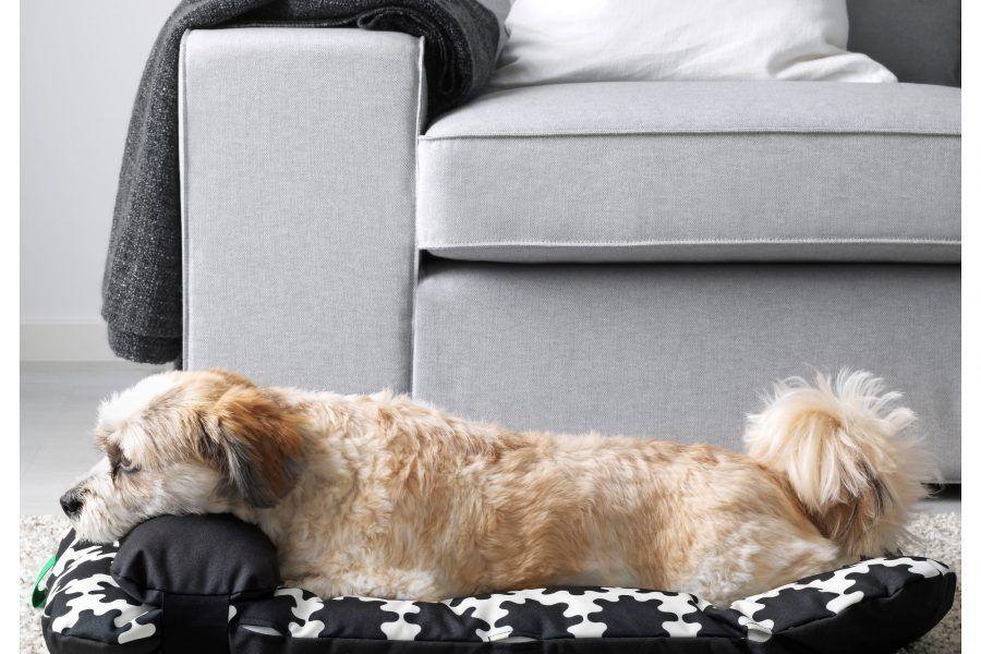 Ikea lancia una collezione di arredi e accessori per animali