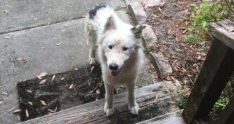 Cane arriva alla veranda di una donna. Lei lo accoglie ma subito dopo si scatena l'inferno