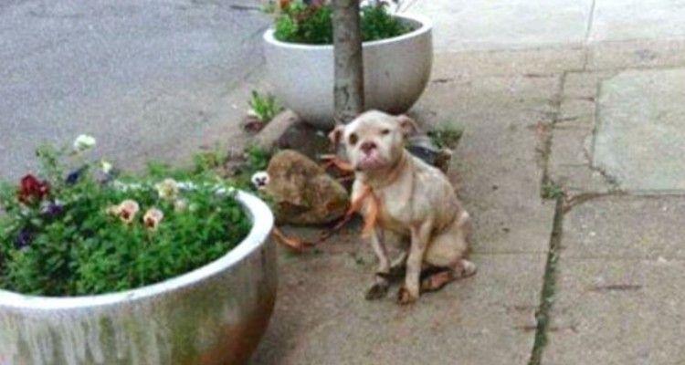 Postino scatta una foto di un cane maltrattato legato a un albero dando al padrone una bella lezione