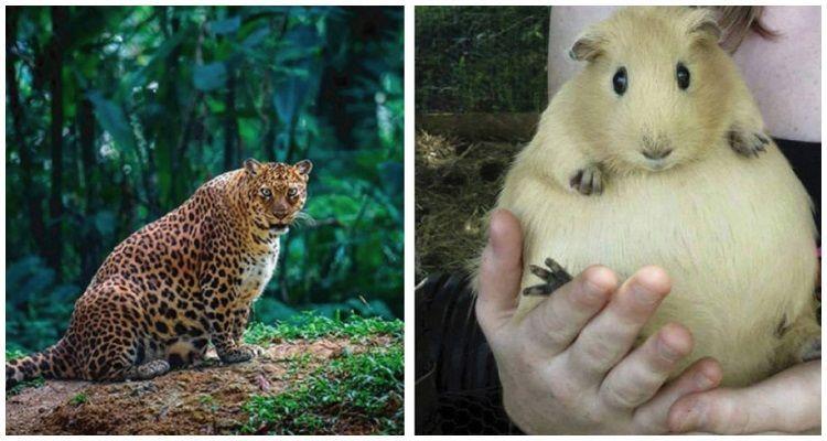 15 future mamme del regno animale