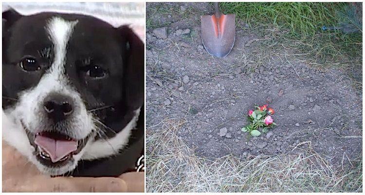 Mugsy, il cane dalle 7 vite