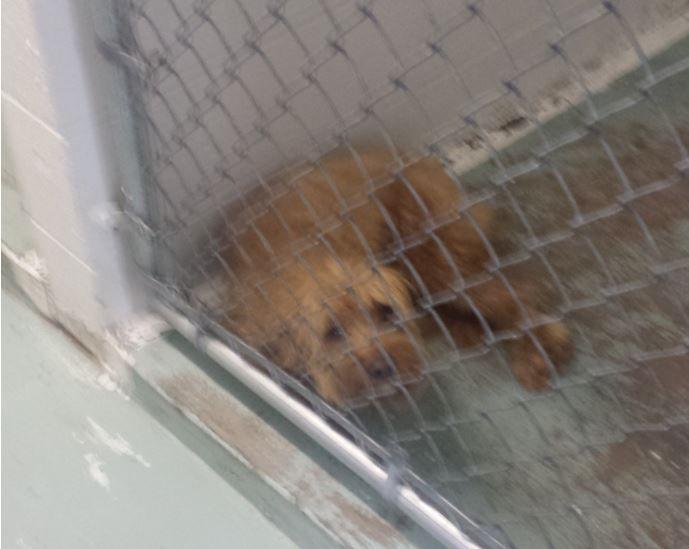 benji cane abbandonato