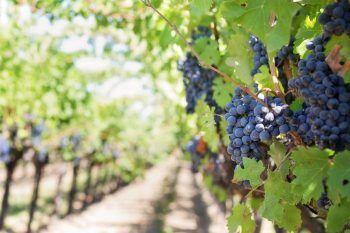 Un tour tra le strade del vino: Italia, Spagna e Francia
