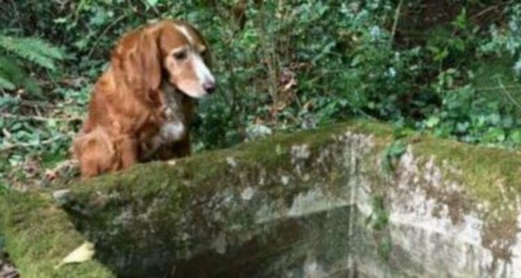 La storia di Tillie: amore, lealtà e fratellanza