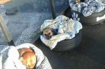 Stavano morendo di freddo, finché i dipendenti della stazione non sono intervenuti