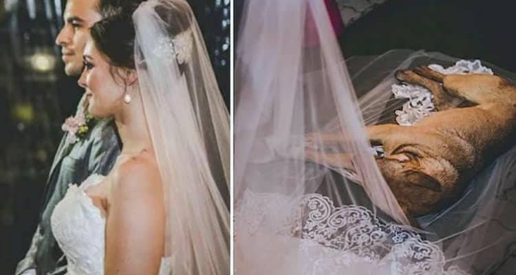 Un ospite inaspettato che ha reso speciale il loro matrimonio