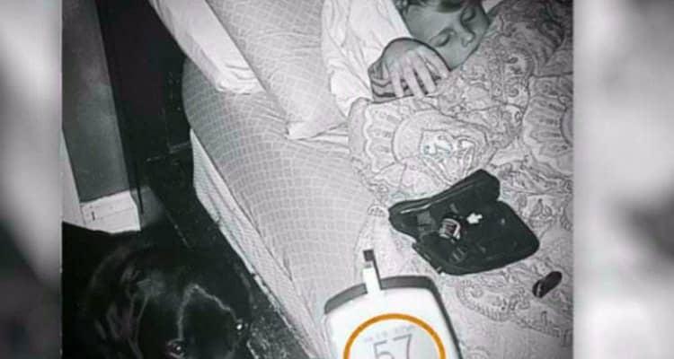 Sveglia tutta la famiglia nel cuore della notte, il cane aveva qualcosa da dire