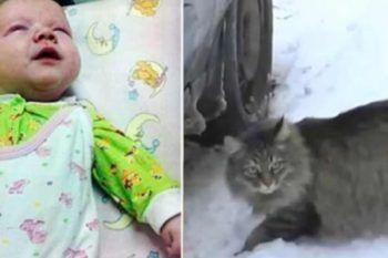 Bambino abbandonato in un cestino: un gatto randagio fa qualcosa di incredibile