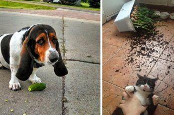 25 animali domestici colti con le zampe nel sacco