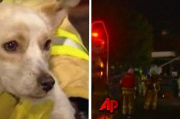 I vigili del fuoco arrivano in una casa che sta andando a fuoco e trovano un cane privo di conoscenza: ecco cosa proteggeva