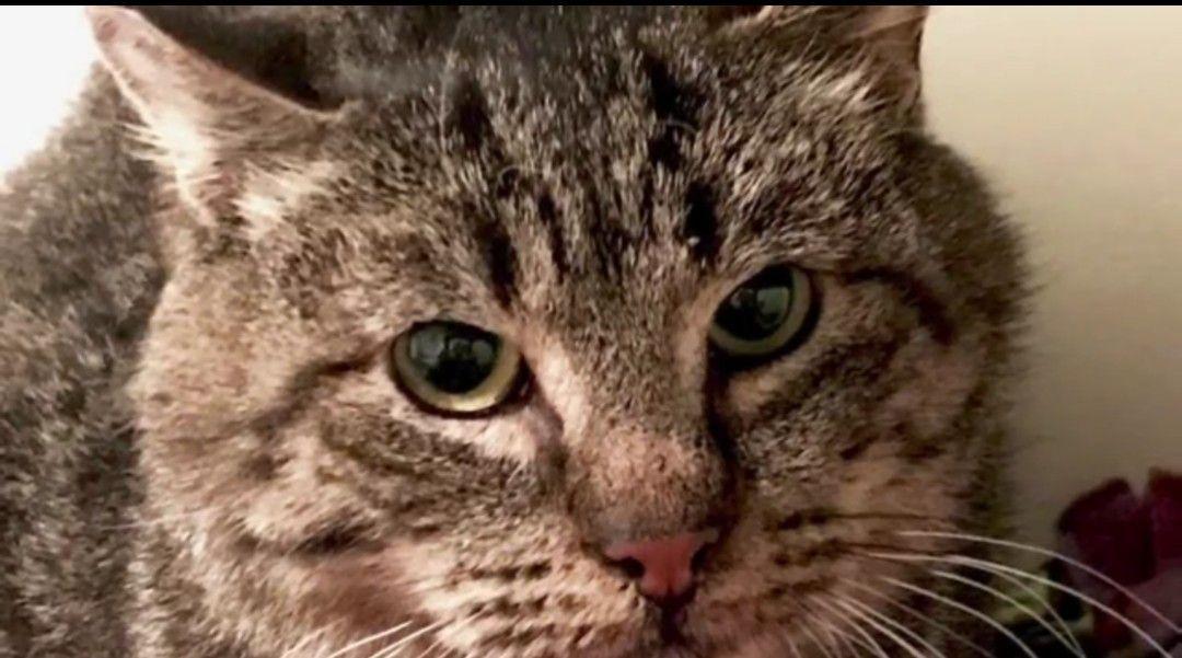 2 Cuccioli Ridanno A Un Gatto Randagio Di Strada La Voglia Di Vivere