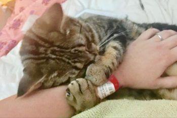 Gattino abbandonato non riesce a smettere di coccolare chi l'ha salvato