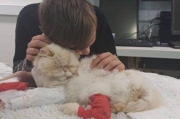 Gatto salva un bambino autistico e ora il ragazzino vuole ricambiare il suo amore