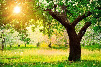 Perché oggi si celebra la Giornata dell'Albero